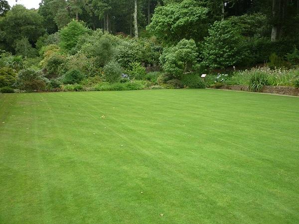 Jaką kosiarkę do trawy kupić?