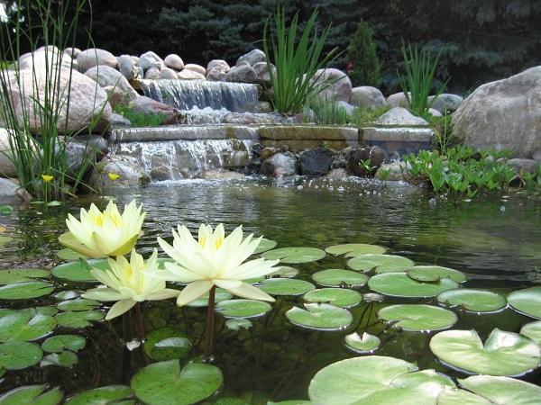Oczko wodne w ogrodzie doskonale spełnia swoją rolę dekoracyjną. Stanowi również schronienie dla różnych gatunków roślin, owadów, płazów czy też ptaków oraz ryb.