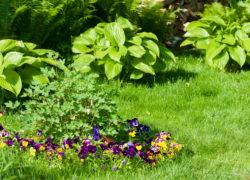 Aeracja, wertykulacja, piaskowanie – tajemnice pięknego trawnika