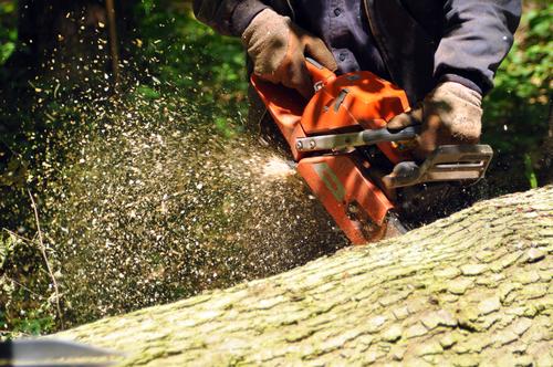 cięcie drewna piła łańcuchowa