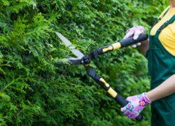 Nożyce do żywopłotu – jaki model sprawdzi się w twoim ogrodzie?