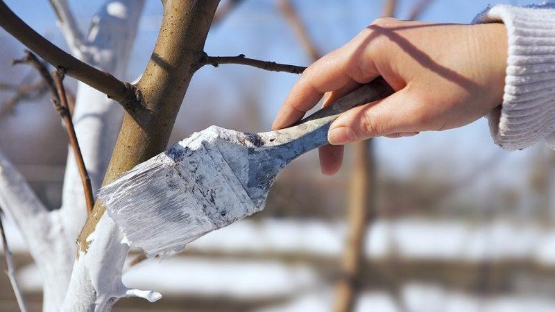 Po co bielić drzewa?