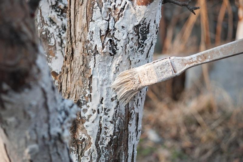 bielenie drzew 3