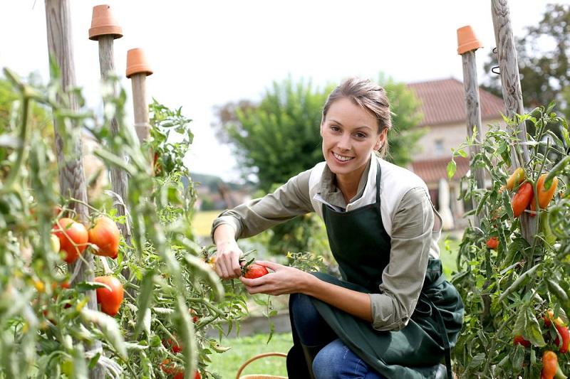 2_chcesz-uprawiac-pomidory-poznaj-podstawowe-zasady
