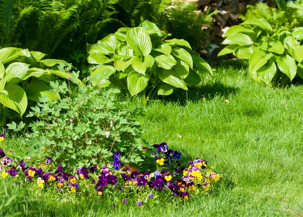 ziemovit - sposoby na wytrzymały trawnik