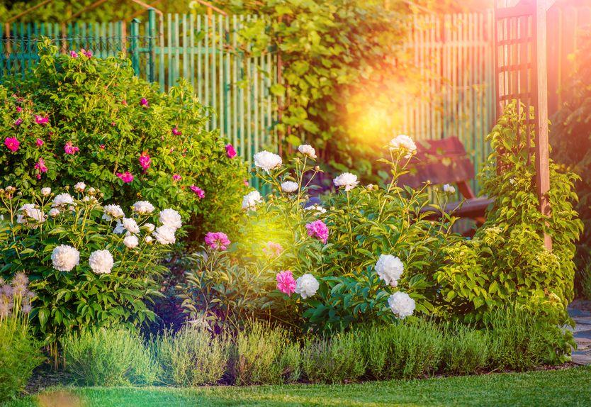 wp3-rosliny-ozdobne-do-ogrodu-ktore-wybrac-1