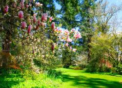 Rośliny ozdobne do ogrodu – które wybrać?
