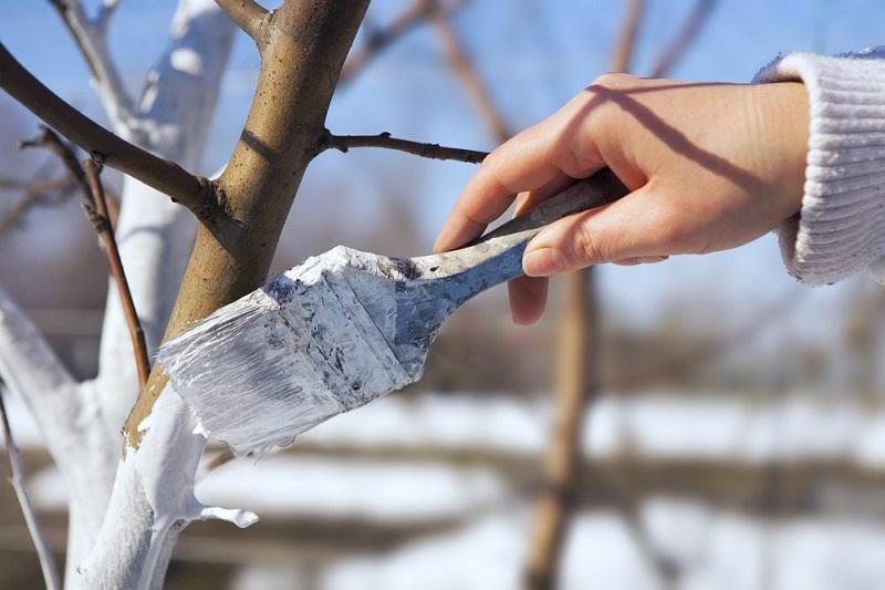 bielenie drzew 1