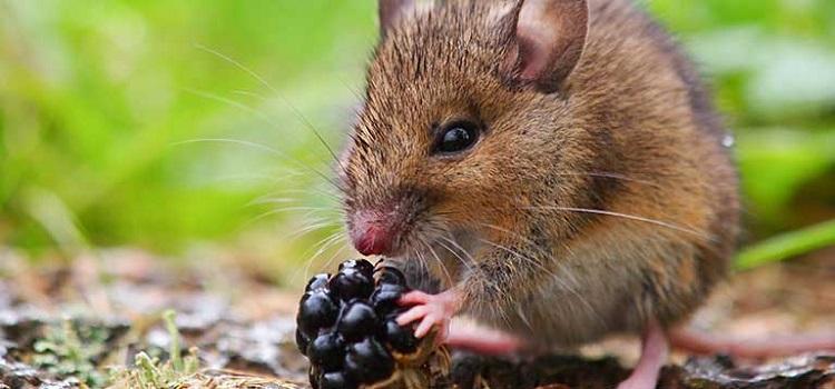 Jaki odstraszacz na gryzonie? Co kupić na kuny, krety i myszy? Poradnik i ranking rozwiązań