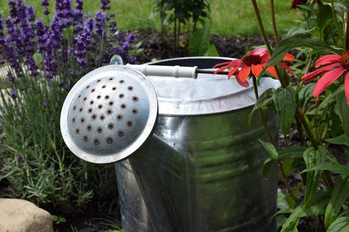 Nawadnianie małego ogrodu – co warto wiedzieć?