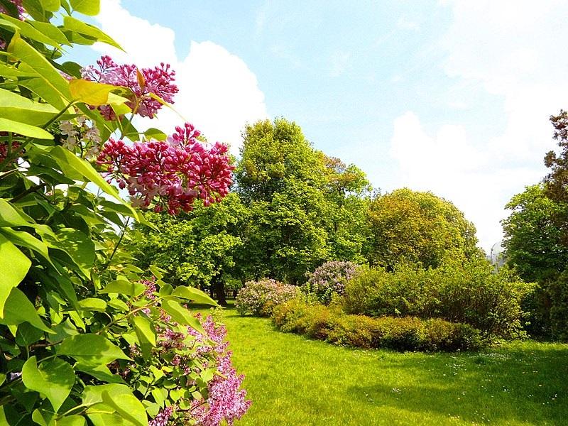 przygotowanie ogrodu