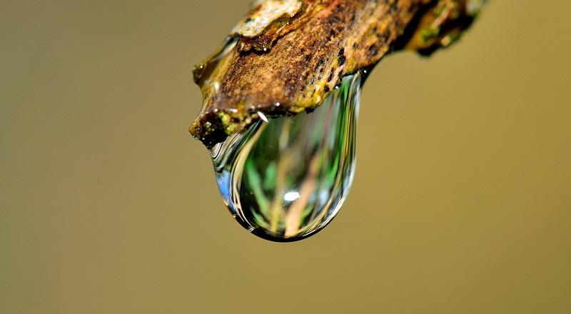 System nawadniania roślin Autopot i Big Drippa – Czy warto zorganizować system nawadniania roślin?